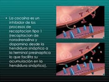 mecanismo-cocaina-inhibidor