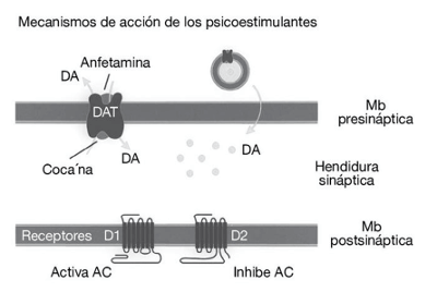 mecanismo-adiccion-cocaina