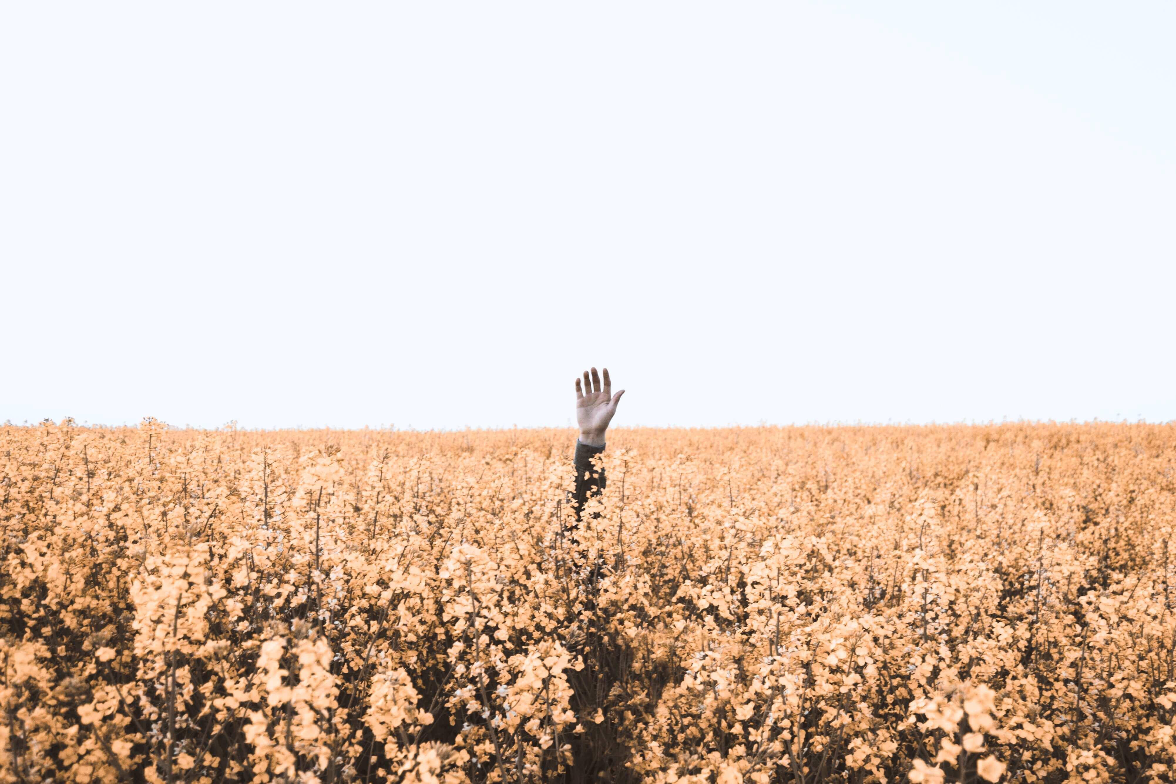 Una mano sobresale entre flores como símbolo de reclamo de ayuda
