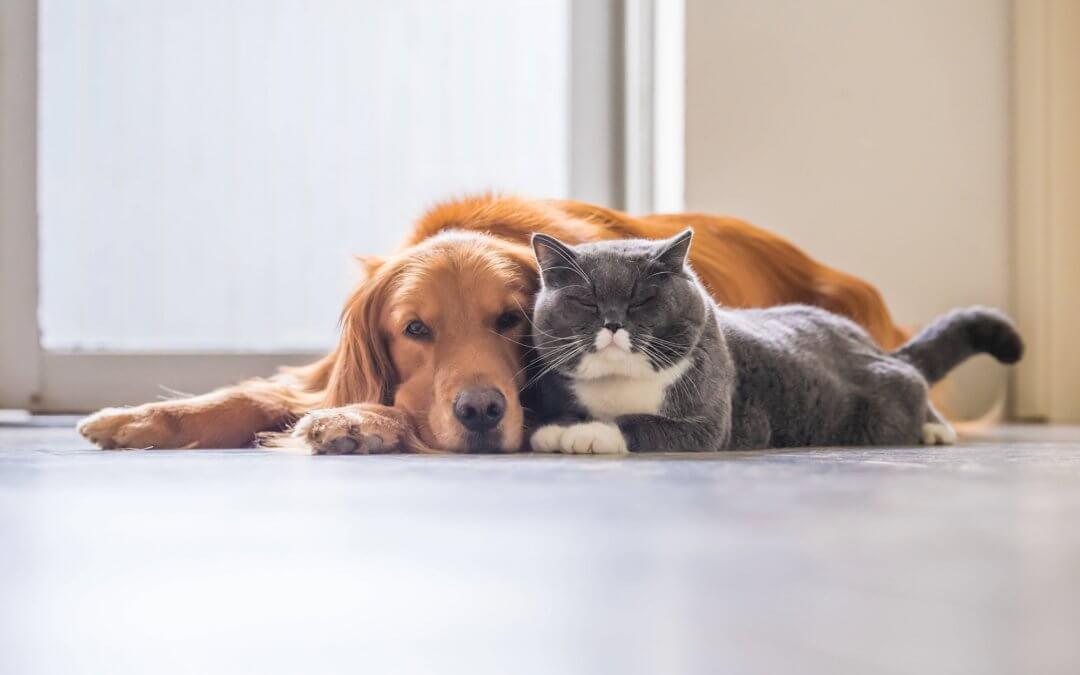 La importancia de las mascotas en los procesos de terapia para dejar la adiccion