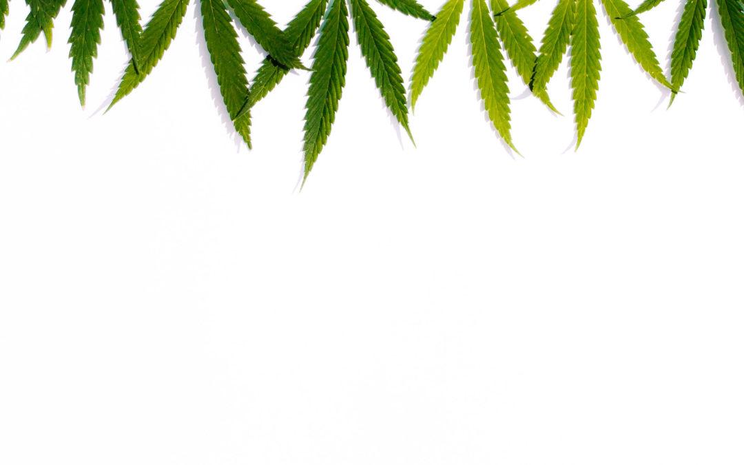 ¿Cómo actúa la marihuana en el organismo?